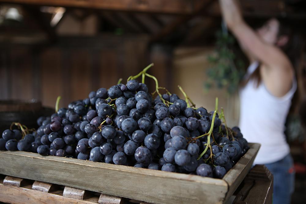 grapesaartdirector